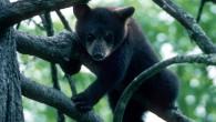 Bear Cub_Mark haskett